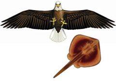 ハイパー「大型ハクトウワシ」練習用バイオカイト付き Bタイプ