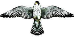 翼長1.24mファルコン