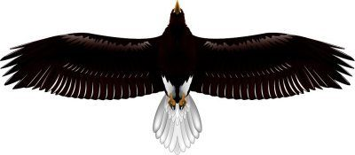 翼長90cmハイパー「オオワシ」