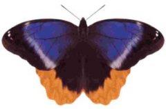 メキシコフクロウ