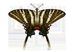 世界の蝶シリーズバイオカイト